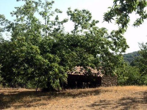 Casa rústica entre castaños