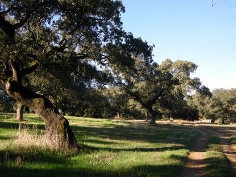 Dehesa en Extremadura con casa de recreo