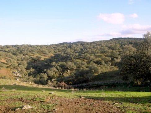 Paisaje de dehesa en Extremadura