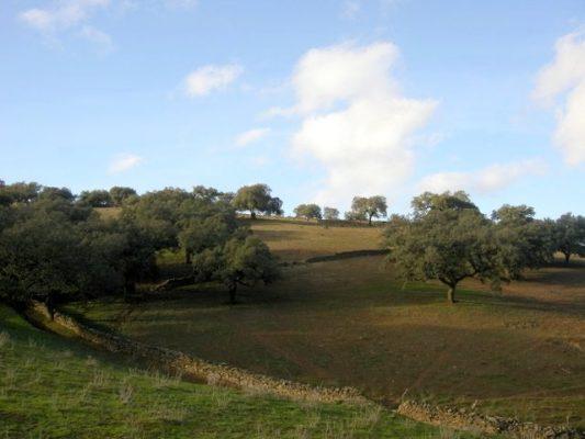 Terreno de encinas en Extremadura