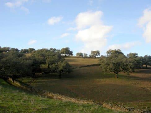Paisaje de encinas en Extremadura