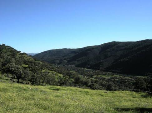 Sierra de eucaliptos al fondo de la dehesa