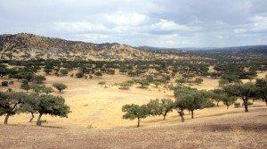 Dehesa de encinar y pastos en el Sur de Extremadura