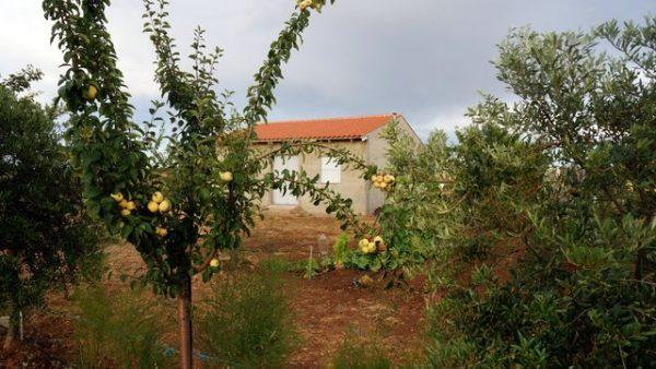 Casa de campo con árboles frutales