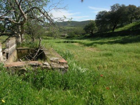 terreno-con-huerto