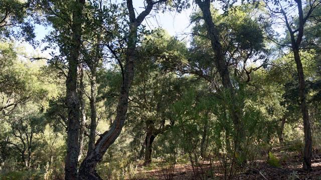 Árboles en la Sierra de Aracena