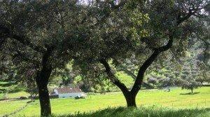 Cortijo en venta en Andalucía: Sierra de Huelva