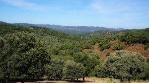 Terreno en venta en la Sierra de Aracena