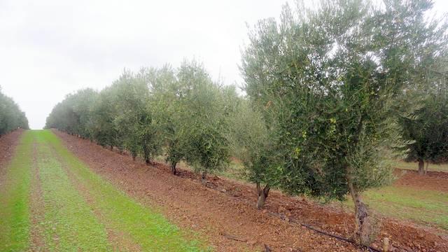 marco-olivar-intensivo