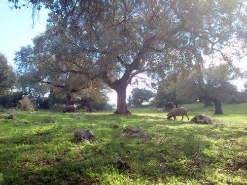 Pequeña dehesa en Extremadura para recreo