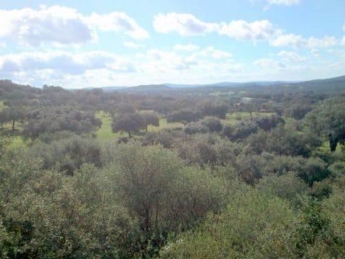 Pequeña dehesa en Extremadura