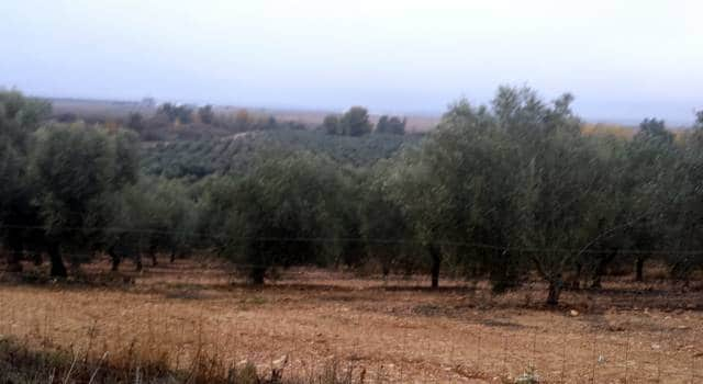 Finca de olivos en Extremadura