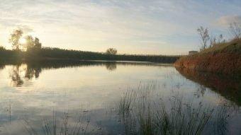 Olivar de riego con laguna