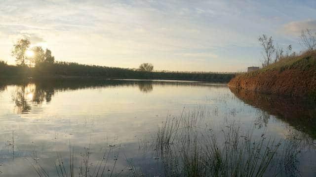 Olivar de riego con lagunas