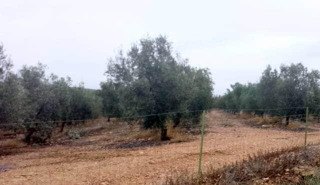 Venta de olivar de regadío