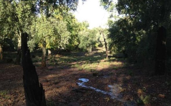 Finca de castaños en la Sierra de Huelva