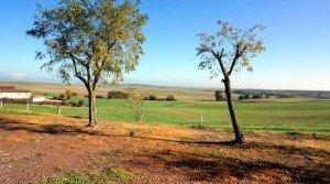 Finca agrícola ganadera en Badajoz con alta productividad