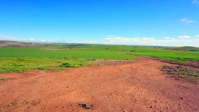 Finca para plantación de olivos
