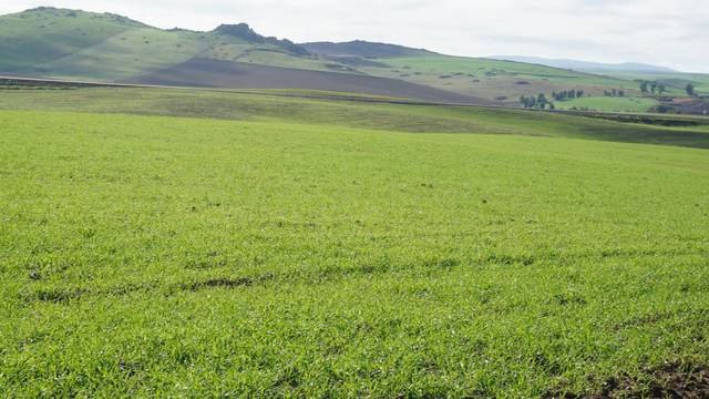 Finca para plantar olivos en Badajoz