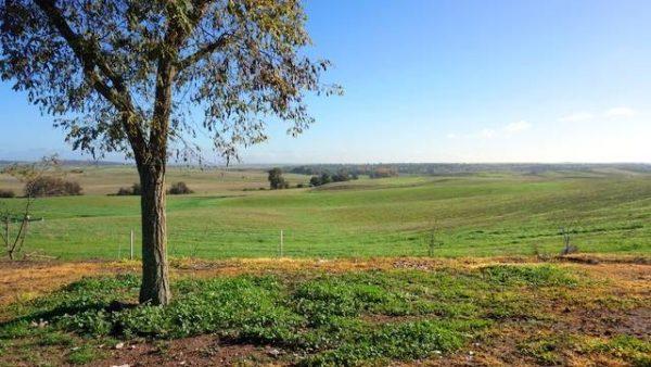 Finca para plantación de almendros u olivos con riego