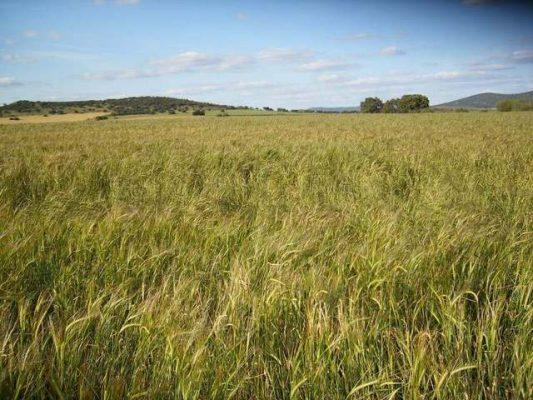 Finca rústica para cultivo de cereal en Extremadura