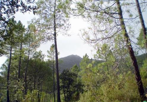 Finca con vistas en la sierra de Monesterio
