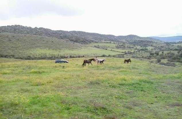 fincas-caballos
