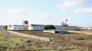 Granja de cerdos para criar primales en Badajoz