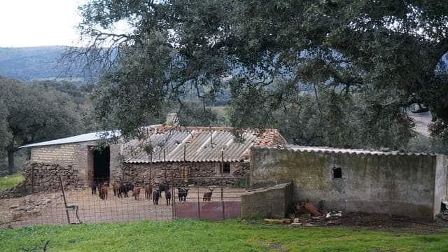 Terreno de 4,5 ha con casa de aperos en Cabeza la Vaca