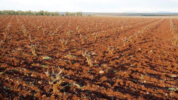 Finca agrícola en venta para viñedo en el centro de Extremadura