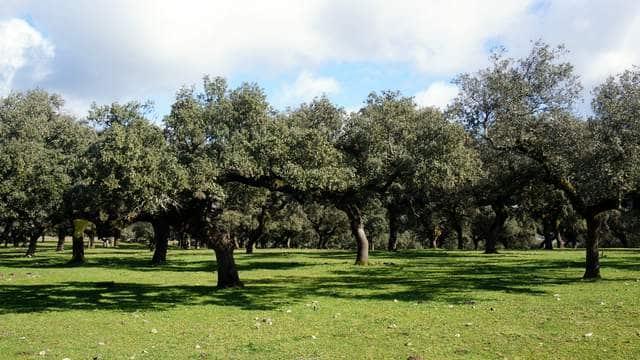 Finca dehesa con cortijo en el suroeste de Extremadura