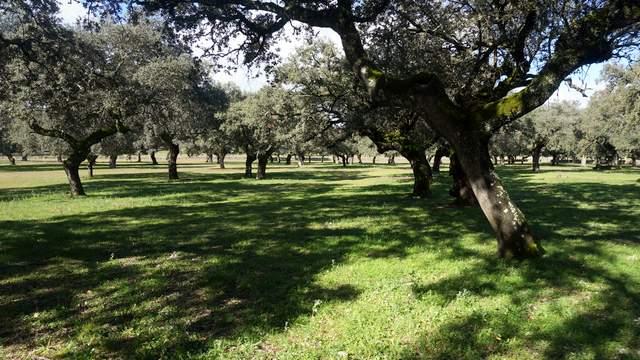 Finca ganadera en Extremadura con encinar denso