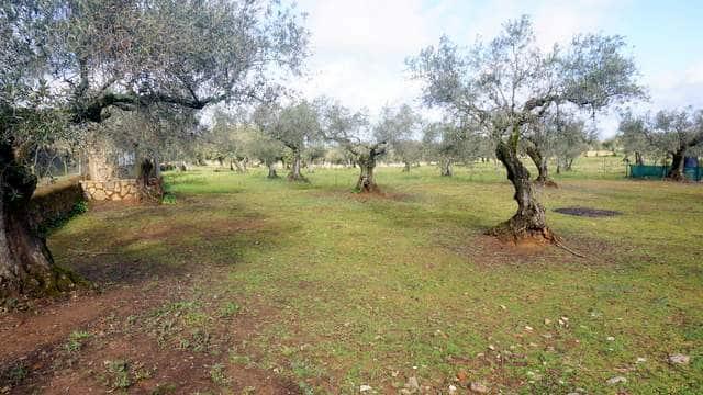 Finca olivar en venta con casa de campo
