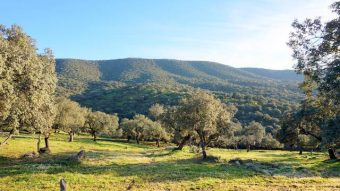 Finca en la sierra de Huelva con cortijo