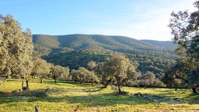 Finca en el Parque Natural de la Sierra de Huelva