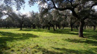 Finca rústica en Extremadura para casa tradicional de campo