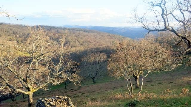 Finca rústica con unas magníficas vistas del Parque Natural de la Sierra de Huelva