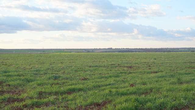 Finca agrícola en venta con el sembrado naciente