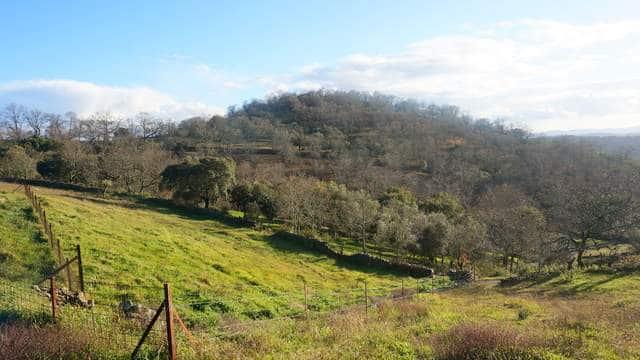 Finca de robles y alcornoques en el Parque Natural Sierra de Aracena