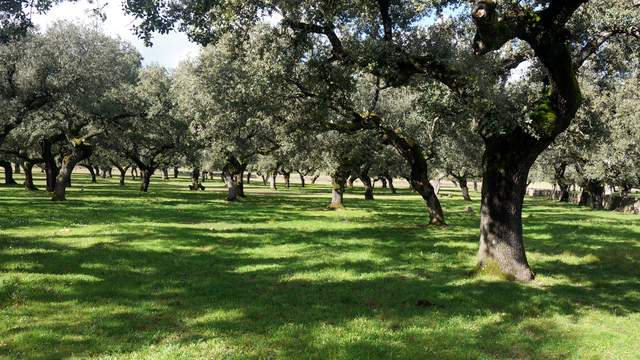 Venta de dehesa pequeña en Extremadura