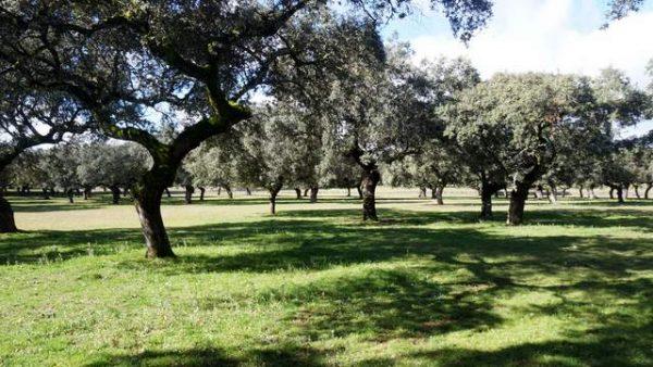 Venta de finca en Extremadura para construir casa rústica