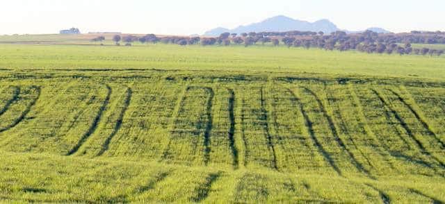 Finca agrícola para inversión en Badajoz