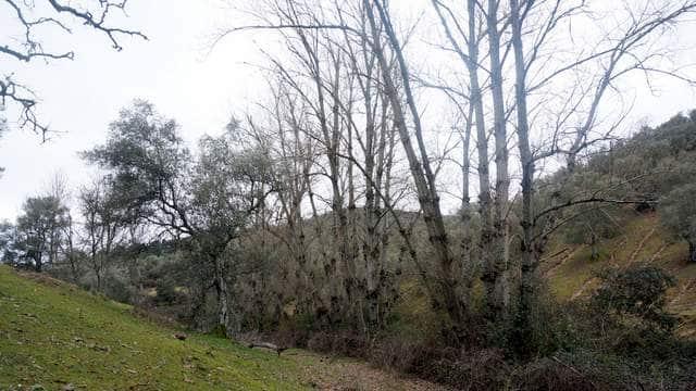 Finca con alameda junto al río Ardila
