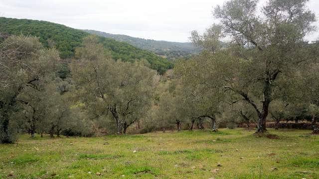 Finca en Calera de León (2 ha), Sierra de Tentudía