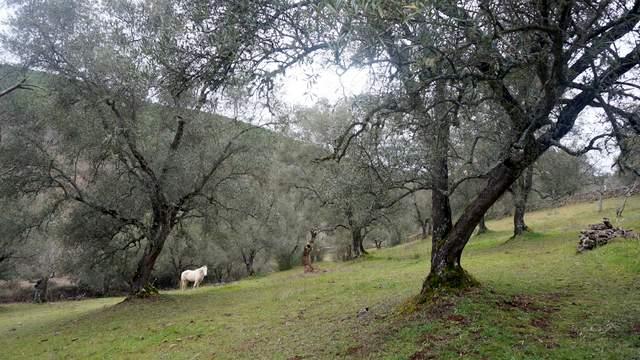 Finca con olivar centenario en el sur de Extremadura