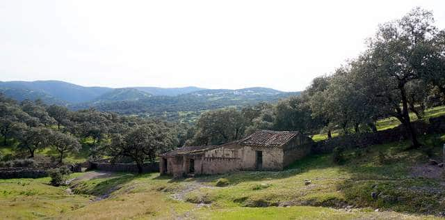 Terreno de encinas en la Sierra de Aracena (5 ha)