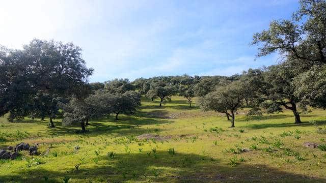 terreno-encinas-sierra-aracena