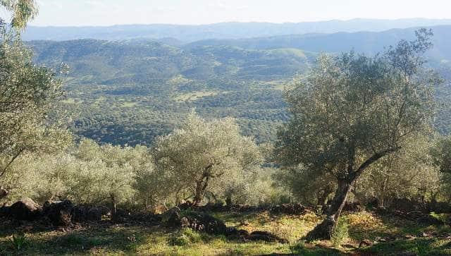 Qué paisajes ver en la sierra de Aracena