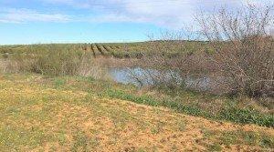 Finca agrícola con olivar superintensivo en Badajoz