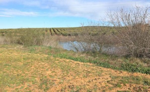 Venta de finca de olivos de regadío en Badajoz